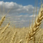 Trend Following Futures Trading: Agricultural Commodities
