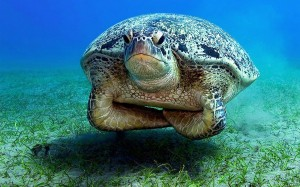 unimpressed-turtle